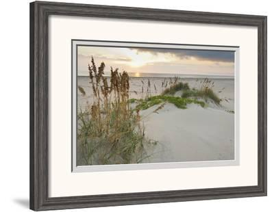 Sea Oats on Gulf of Mexico at South Padre Island, Texas, USA-Larry Ditto-Framed Photographic Print