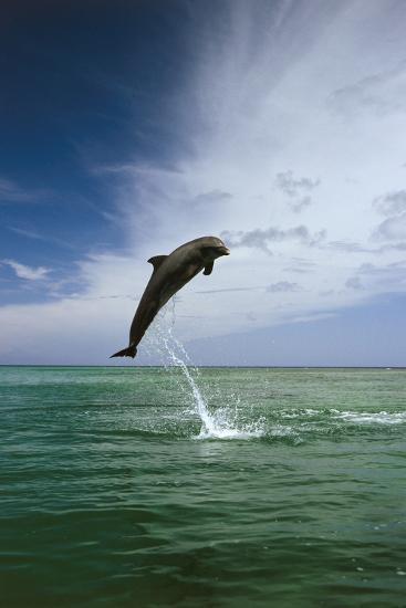 Sea, Ordinary Dolphin, Delphinus Delphis, Jump, Series-Frank Lukasseck-Photographic Print