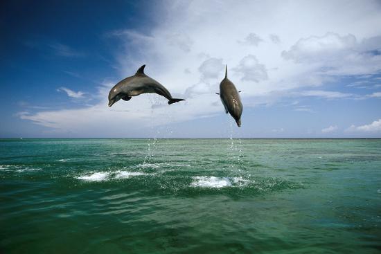 Sea, Ordinary Dolphins, Delphinus Delphis, Jump, Series-Frank Lukasseck-Photographic Print