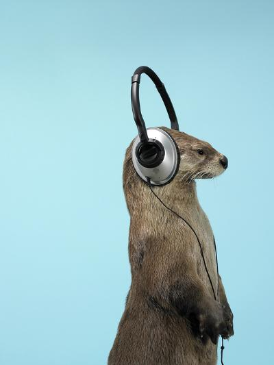 Sea Otter Listening to Headphones-Andy Reynolds-Photographic Print