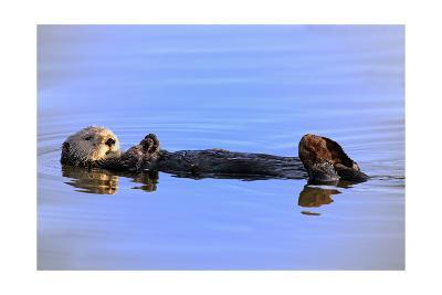 Sea Otter Relaxing-Lantern Press-Art Print