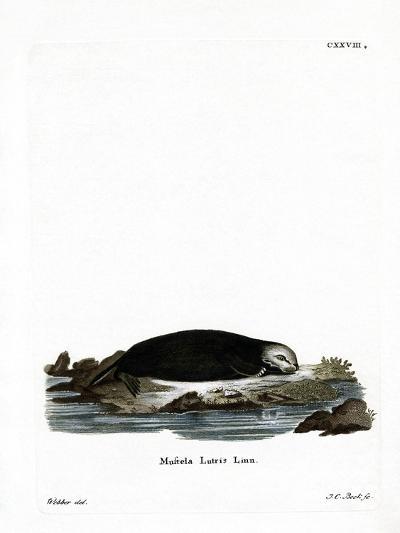 Sea Otter--Giclee Print