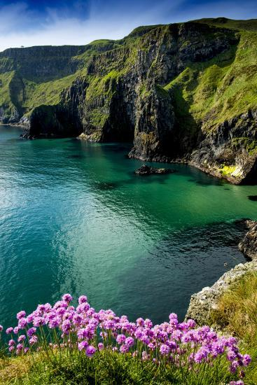 Sea Pinks at Carrick-A-Rede on the North Coast of Northern Ireland-Chris Hill-Photographic Print