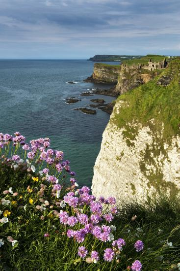 Sea Pinks at Dunluce Castle on the North Coast of Northern Ireland-Chris Hill-Photographic Print
