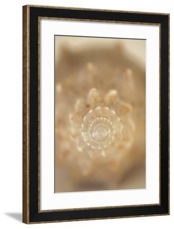 Sea Shell V-Karyn Millet-Framed Photographic Print