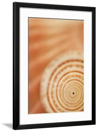 Sea Shell VI-Karyn Millet-Framed Photographic Print