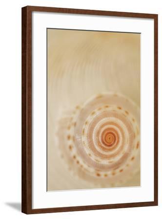 Sea Shells I-Karyn Millet-Framed Photographic Print