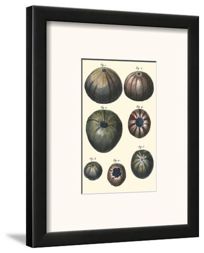 Sea Shells IV-Denis Diderot-Framed Art Print