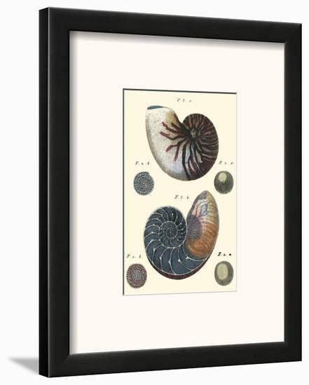 Sea Shells VI-Denis Diderot-Framed Art Print