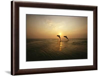 Sea, Silhouette, Ordinary Dolphins, Delphinus Delphis, Jump-Frank Lukasseck-Framed Photographic Print