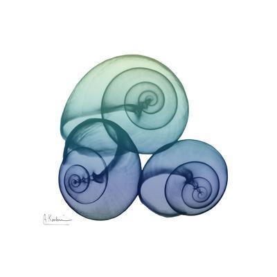 https://imgc.artprintimages.com/img/print/sea-sky-snails_u-l-q19b7wv0.jpg?p=0