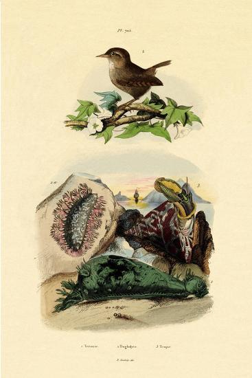Sea Slug, 1833-39--Giclee Print