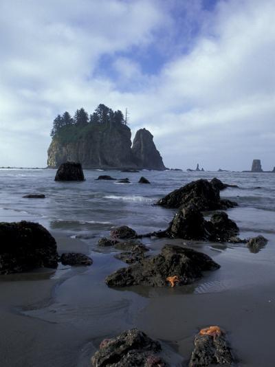 Sea Stacks and Sea Stars on Second Beach, Olympic National Park, Washington, USA-Jamie & Judy Wild-Photographic Print