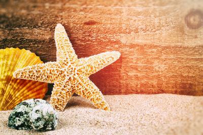 Sea Star and Shells-paulgrecaud-Photographic Print