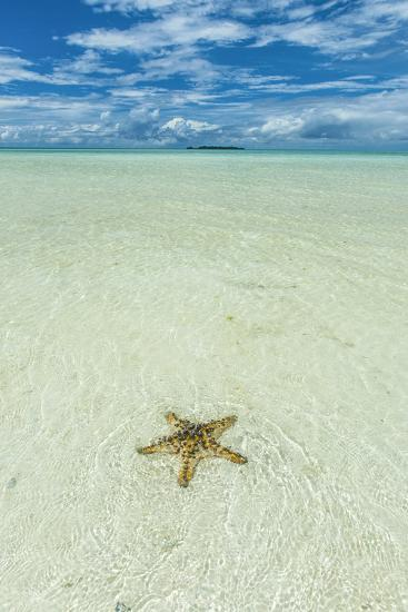 Sea Star in the Sand on the Rock Islands, Palau, Central Pacific-Michael Runkel-Photographic Print