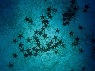 Sea Stars at Gordon Rocks-Heather Perry-Photographic Print