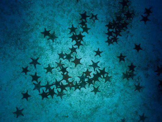 Sea Stars at Gordons Rocks-Heather Perry-Photographic Print