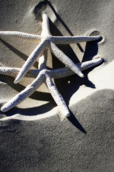 Sea Stars I-Alan Hausenflock-Photographic Print