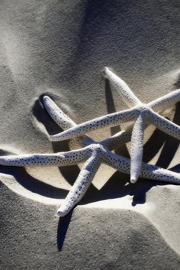 Sea Stars II-Alan Hausenflock-Photographic Print
