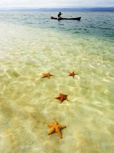 Sea Stars in Tropical Water at Star Beach-Alfredo Maiquez-Photographic Print