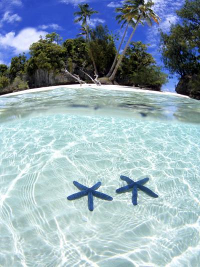 Sea Stars, Rock Islands, Palau-Michael DeFreitas-Photographic Print