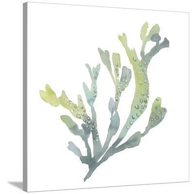 Sea Tangle V-Sandra Jacobs-Stretched Canvas Print