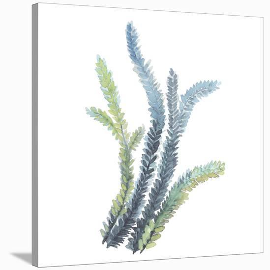 Sea Tangle VI-Sandra Jacobs-Stretched Canvas Print
