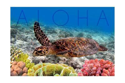 Sea Turtle and Coral - Aloha-Lantern Press-Art Print