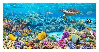 Sea Turtle and fish, Maldivian Coral Reef-Pangea Images-Giclee Print