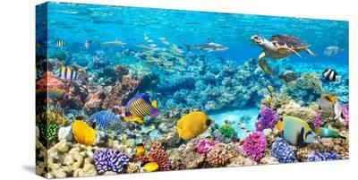 Sea Turtle and fish, Maldivian Coral Reef-Pangea Images-Stretched Canvas Print
