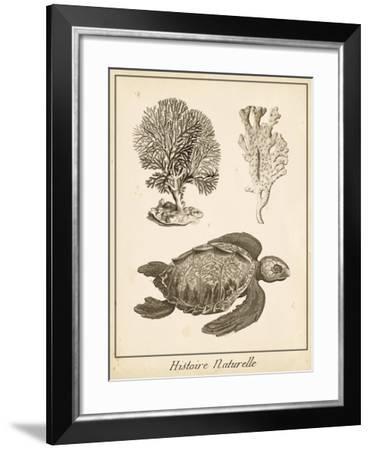 Sea Turtle Study I-Vision Studio-Framed Art Print