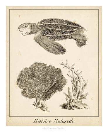 https://imgc.artprintimages.com/img/print/sea-turtle-study-ii_u-l-f4ewu30.jpg?artPerspective=n