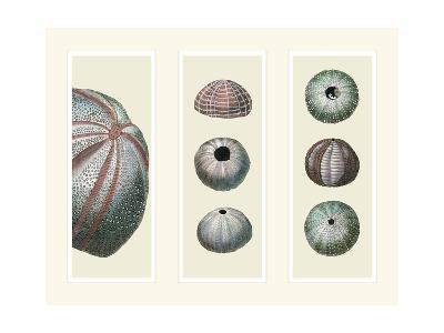 Sea Urchins on 3 Panels-Fab Funky-Art Print