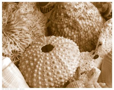 Sea Urchins--Art Print