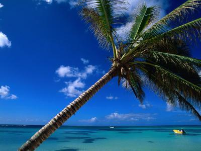Sea View Beyond Palm Tree, La Romana, La Romana, Dominican Republic-Greg Johnston-Photographic Print