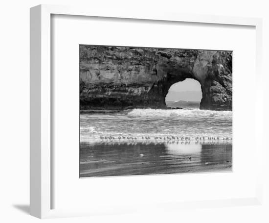 Seabirds And Sea Arch-Murray Bolesta-Framed Art Print