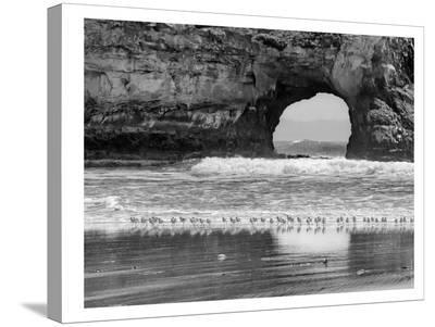Seabirds And Sea Arch-Murray Bolesta-Stretched Canvas Print