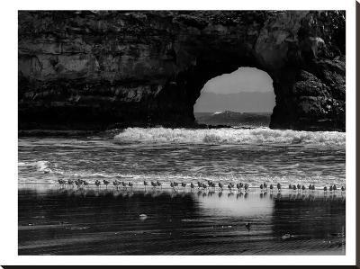 Seabirds And Sea Arch-Murray Bolesta-Stretched Canvas Print
