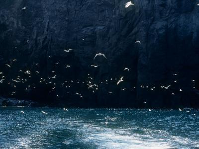 Seabirds--Photographic Print