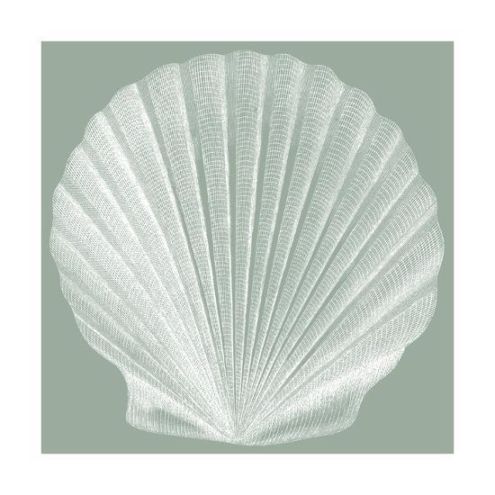 Seabreeze Shells II-Vision Studio-Art Print