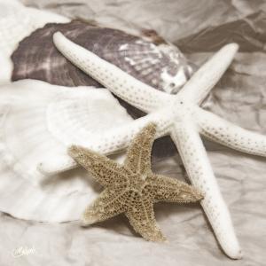 Seachells in White II
