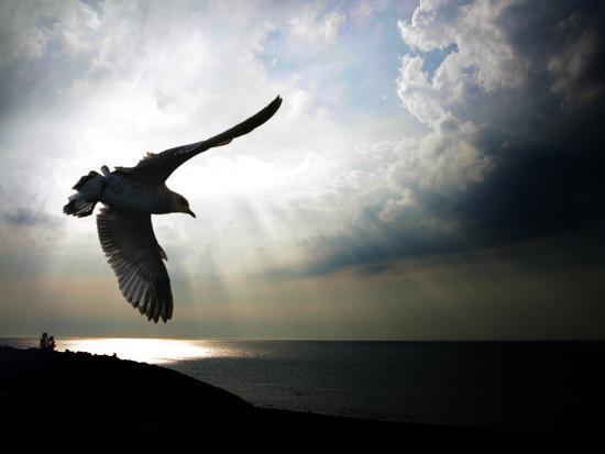Seagul in flight over Lake Michigan beach, Indiana Dunes, Indiana, USA-Anna Miller-Photographic Print
