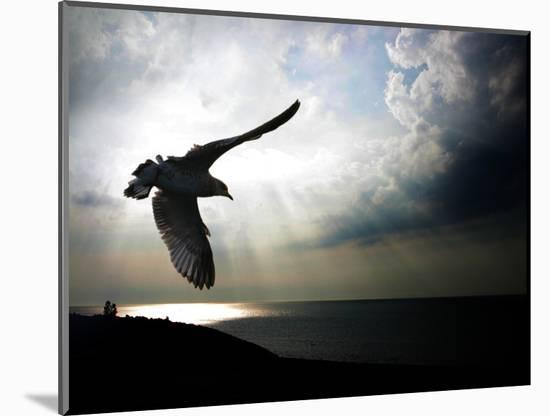 Seagul in flight over Lake Michigan beach, Indiana Dunes, Indiana, USA-Anna Miller-Mounted Photographic Print