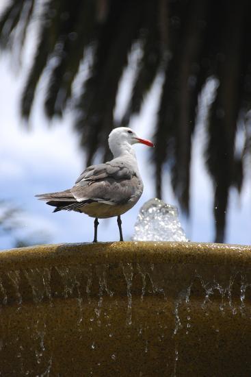 Seagul on Sausalito Fountain, Marin County, California-Anna Miller-Photographic Print