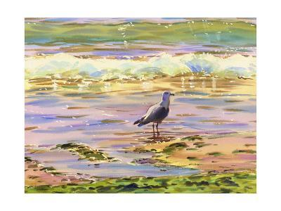 Seagull at Water's Edge--Art Print