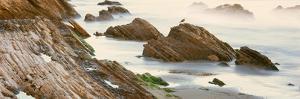 Seagull Perching on the Beach, Gaviota, Santa Barbara County, California, Usa