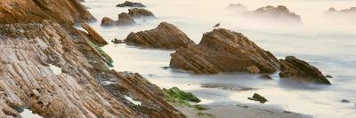 Seagull Perching on the Beach, Gaviota, Santa Barbara County, California, Usa--Photographic Print