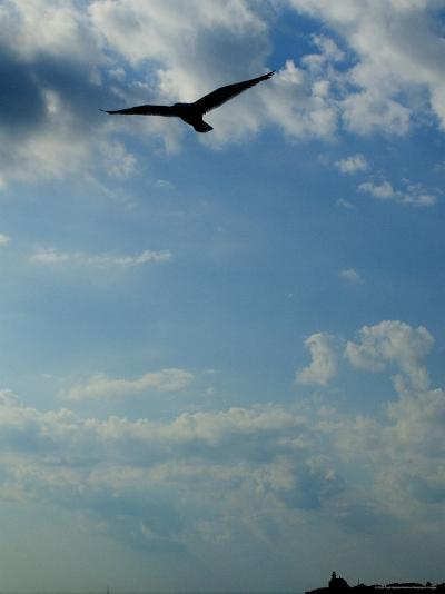 Seagull Soars over Long Island Sound and Plum Island Light-Todd Gipstein-Photographic Print