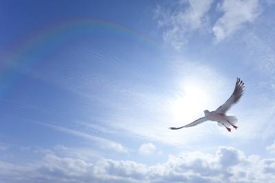 Seagull-ICHIRO-Photographic Print