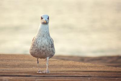 Seagull-by Juanedc-Photographic Print